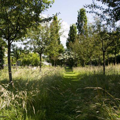 Jacquet SA - aménagement naturel - jardin privé (37)