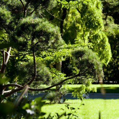Jacquet SA - soin aux arbres - jardin privé