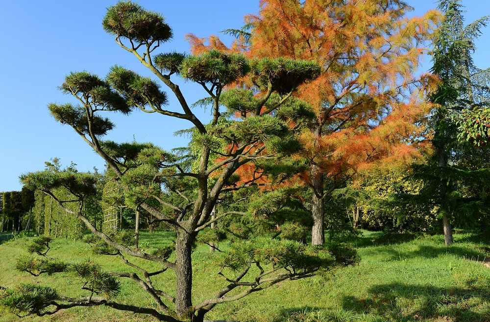 JACQUET SA - LA PEPINIERE - Coniferes
