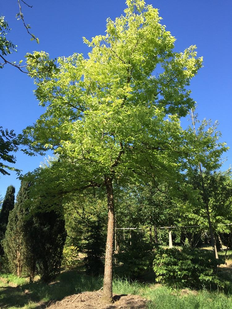 Jacquet SA - soin aux arbres