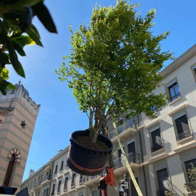 Un arbre à emporter ! Jacquet SA x Monsieur Bouillon